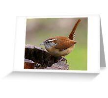 Carolina Wren Greeting Card
