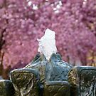 Cherry Blossoms #2 by Benedikt Amrhein