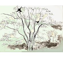 Crows in the Sycamore Photographic Print