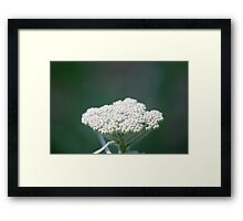 Dreamy Flower Framed Print