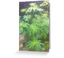 weed plant Greeting Card