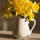 Daffodil Filled Jug by Sandra Foster