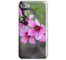 Nectarine Blossoms iPhone Case/Skin