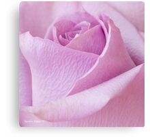 Delicate Lavender Rose Macro Canvas Print
