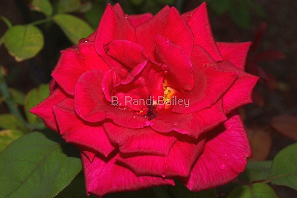 Ruby red with raindrops by ♥⊱ B. Randi Bailey