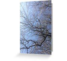 Tree Cards & Postcards Greeting Card