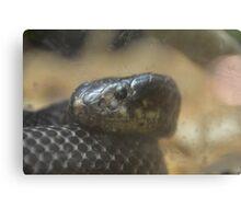 Snake 1 Canvas Print