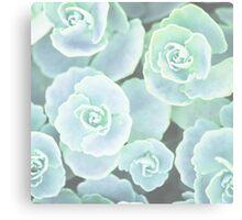 Plants print, pastel mint green Houseleek Canvas Print