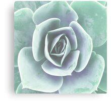 Plant print, pastel mint green Houseleek Canvas Print