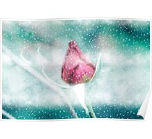 Digitally manipulated Pink garden rose in a blizzard  Poster