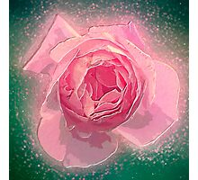 Digitally manipulated exploding Pink English rose as seen from above  Photographic Print