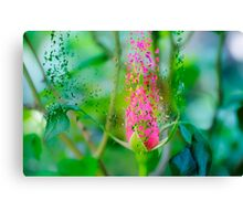 Digitally manipulated exploding red Rose bud Canvas Print