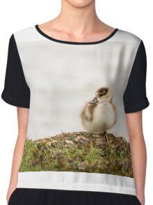 Egyptian Goose Chick #2 Chiffon Top