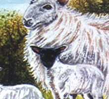Black Faced Lambs Sticker