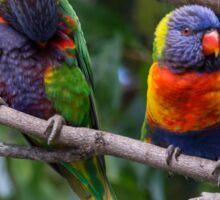 Two Australian Rainbow Lorikeets Sticker