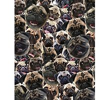 Pugs, not drugs Photographic Print