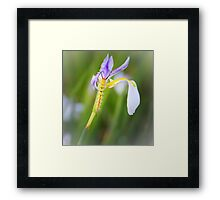 Tussock Caterpillar and Fairy Iris Framed Print