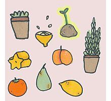Fruit and Plants Photographic Print