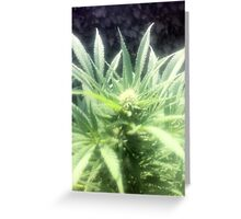 Nice green flower Greeting Card