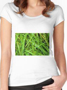 Winter Grass Women's Fitted Scoop T-Shirt