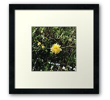 Yellow Flower IPhone Case Framed Print