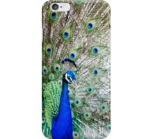 Peacock and feathers iPhone Case/Skin