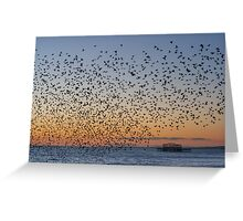 Murmuration Greeting Card