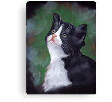 Tuxedo Cat Looking Up: Kitten: Oil Pastel Painting Canvas Print