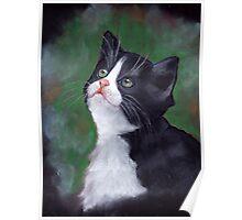 Tuxedo Cat Looking Up: Kitten: Oil Pastel Painting Poster