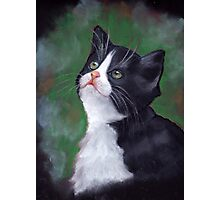 Cat Looking Up: Kitten: Oil Pastel Painting Photographic Print