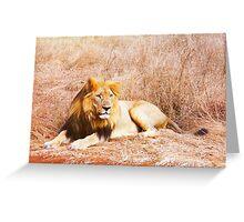 African Lion Enjoying the Sun Greeting Card