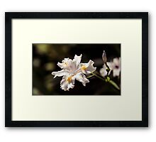 White Iris 2 Framed Print