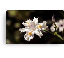 White Iris 2 Canvas Print