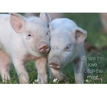 Cute Piglets Poster for Vegans/Vegetarians Photographic Print