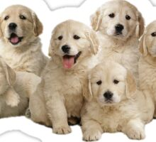 Golden Puppies Sticker