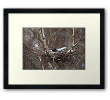 crow in the nest covered snow  Framed Print