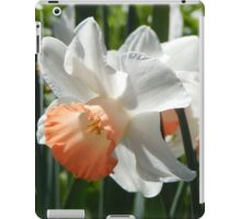 Two-tone Daffodils iPad Case/Skin