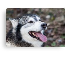 Wolf Dog Canvas Print