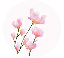 Pink Flower #1 Photographic Print