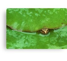 frog and lily pad Canvas Print
