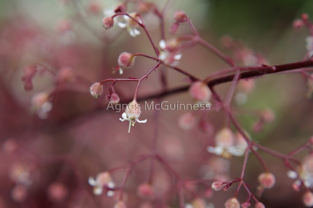 Dusk pink by Agnes McGuinness