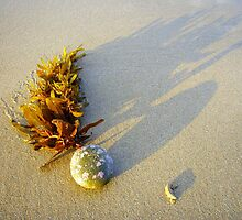 Seaweed stuck on stone by NaturalCultural