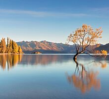 Autumn Gold - Wanaka New Zealand by Beth  Wode