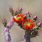 Arc of Staghorn Blooms by Kathleen Brant