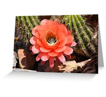 Torch Cactus Flower Greeting Card