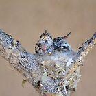 Baby Hummingbirds by Kathleen Brant