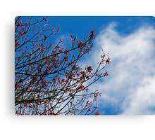 red buds blue sky Canvas Print