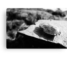 Black and White Crab Shell Canvas Print