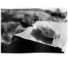 Black and White Crab Shell Poster