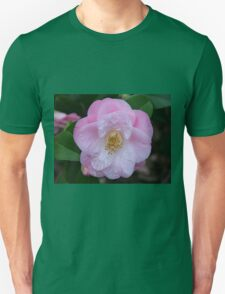 Pale pink camellia flower in bloom T-Shirt